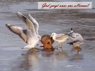God zorgt voor ons allemaal