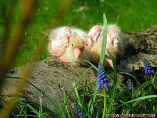 Jonge duifjes op boomstam
