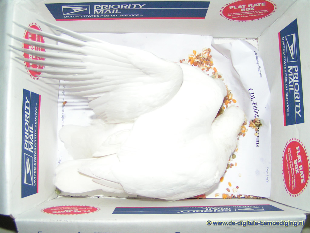 Luchtpost... Witte duiven in een doos