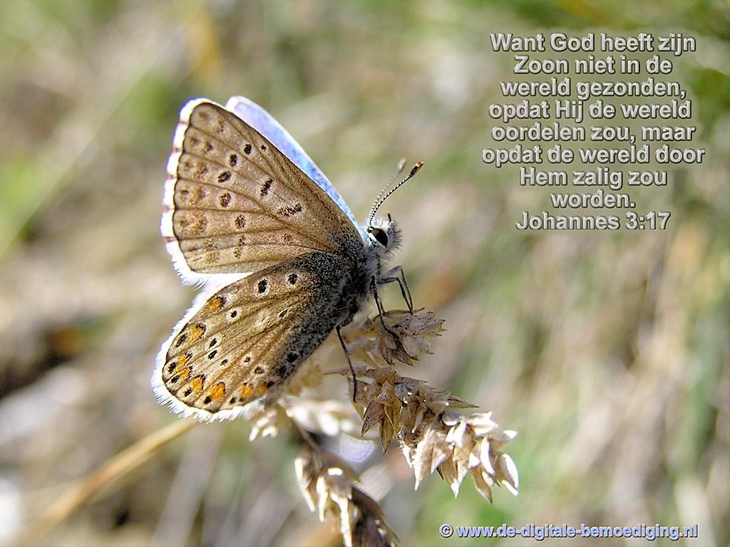 Vlinder Johannes 3:17