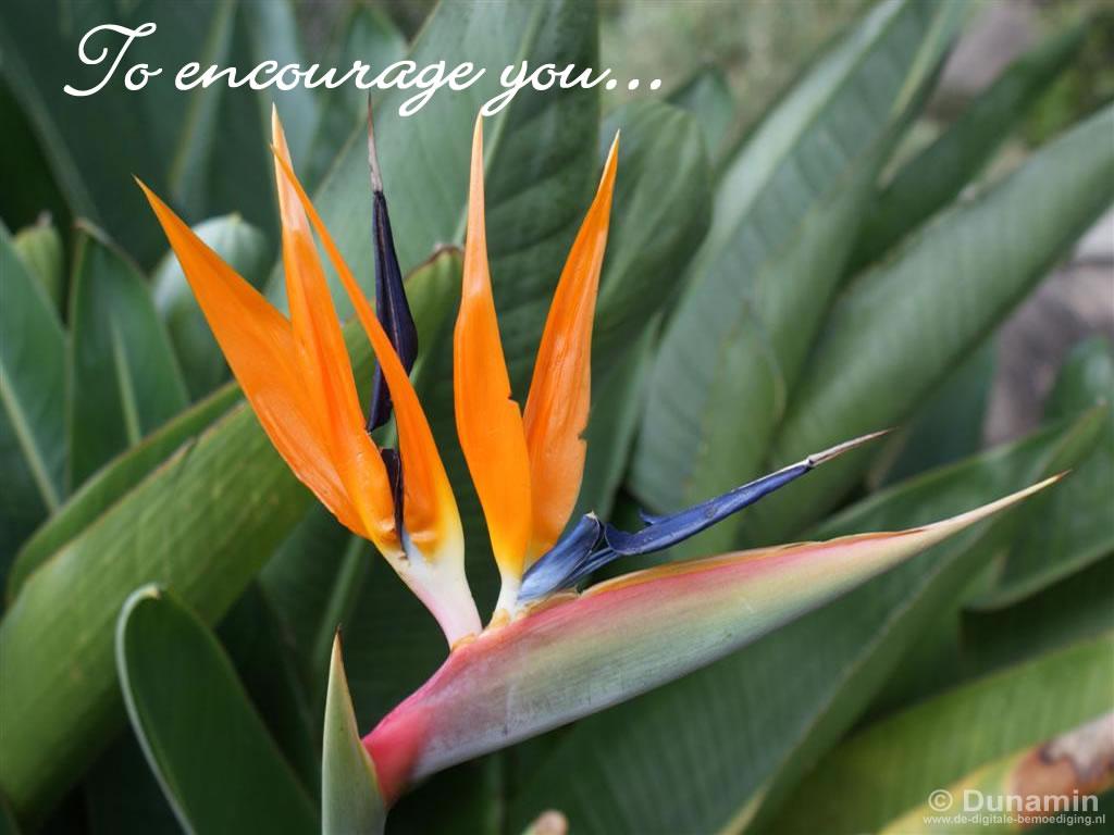 To encourage you