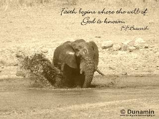 Faith begins where the will of God is known