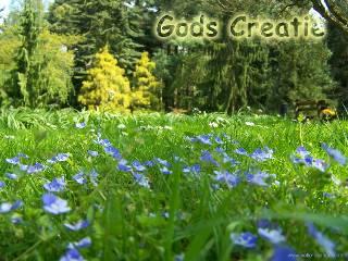 Gods Creatie