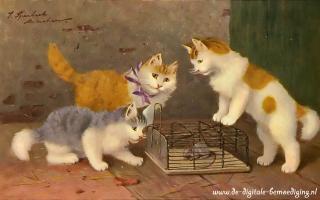 Poezen met muizen val
