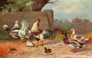 Kippen en eenden