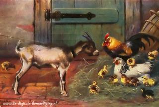 Geit met kippenfamilie