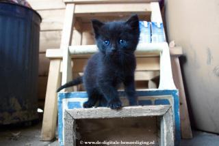Zwart Kitten in Schuur