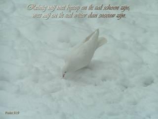 Witter dan sneeuw Psalm 51