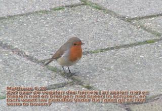 Zie naar de vogels