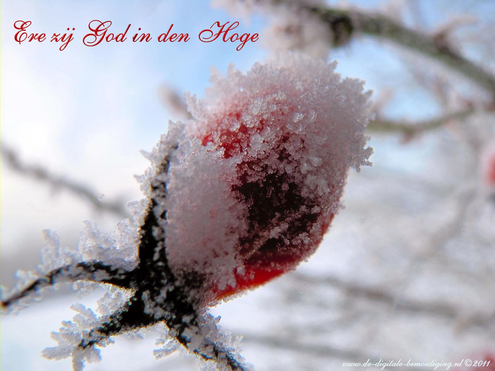 Gezegende Kerstdagen Ecard Rode Roos