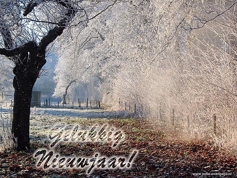Gelukkig Nieuwjaar, een witte boomgaard, besneeuwde bomen, stuifsneeuw, rijp